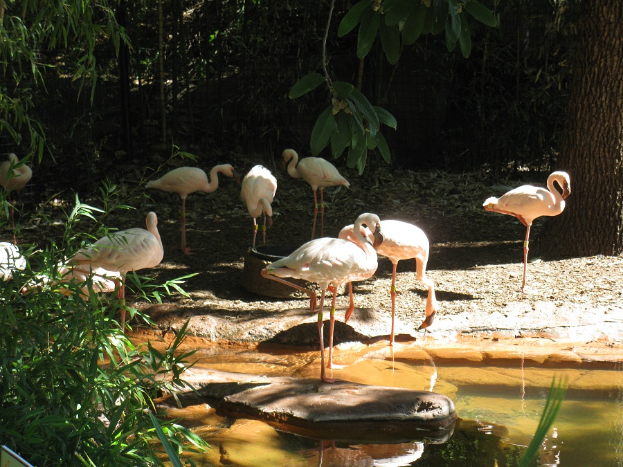 Sell Dallas-Fort Worth Real Estate Fast [Dallas Zoo Lesser Flamingos]